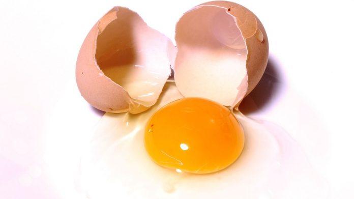 Componenti dell'uovo | Paola Azzolina